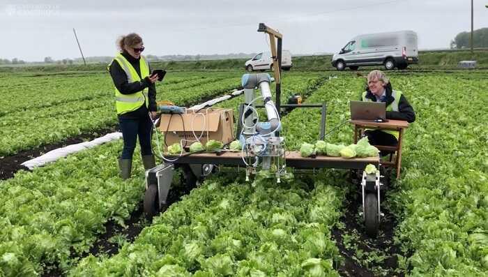 lettuce-robot-1.jpg