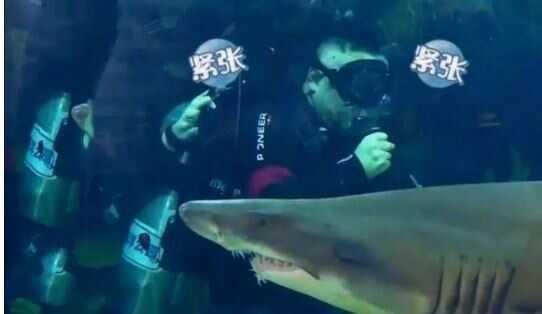 鲨鱼 2.JPG