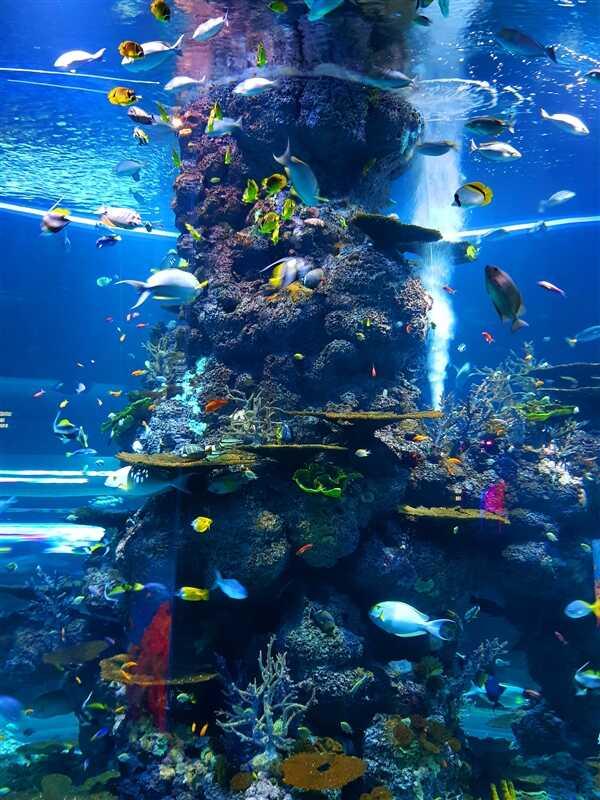 科学家首次揭示了蓝头鱼是如何改变性别的