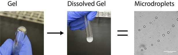 prebiotic-cells-1.jpg