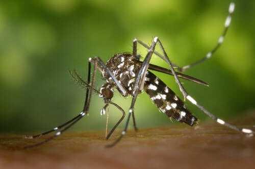 据外媒报道:在美国马萨诸塞州的蚊子样本中检测出了东部马脑炎病毒