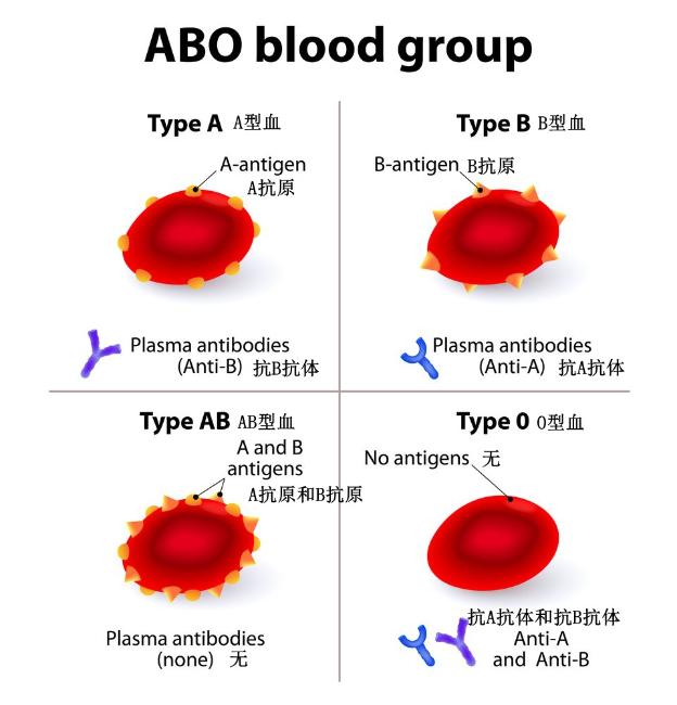 血型的发现史竟然是一部血迹斑斑的输血史9