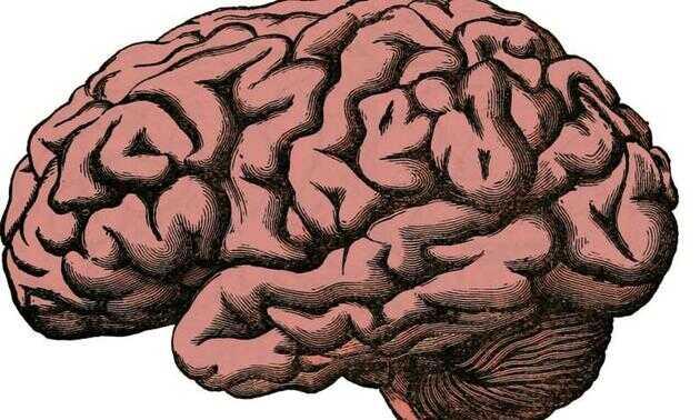 最新研究报告提出宿主应对操控性寄生虫进化的 4 种策略:限制其进入大脑;增大操控成本;增大信号复杂性;增强抗变换性。
