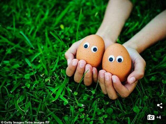 吃鸡蛋究竟是好是坏?时至今日,这场围绕着鸡蛋进行的大讨论仍在继续