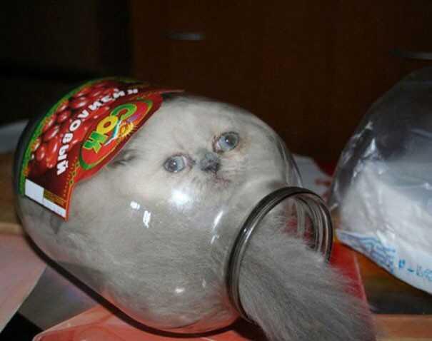"""""""猫是液体吗?""""科学家们认真研究了这个问题"""