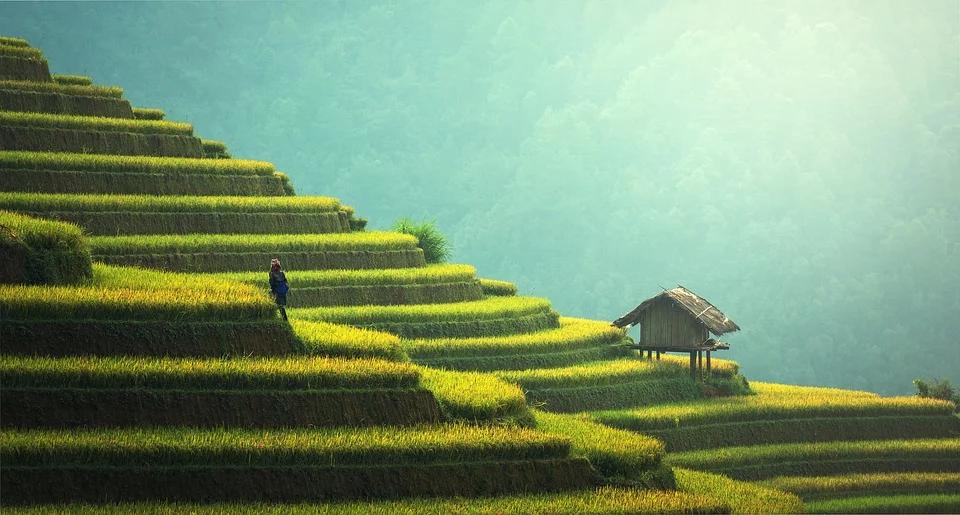 36 氪首发|农业技术服务商「慧云信息」完成B轮融资,投资方为数字广西集团