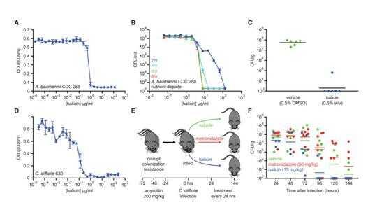 Halicin 在小鼠感染模型上显示有效