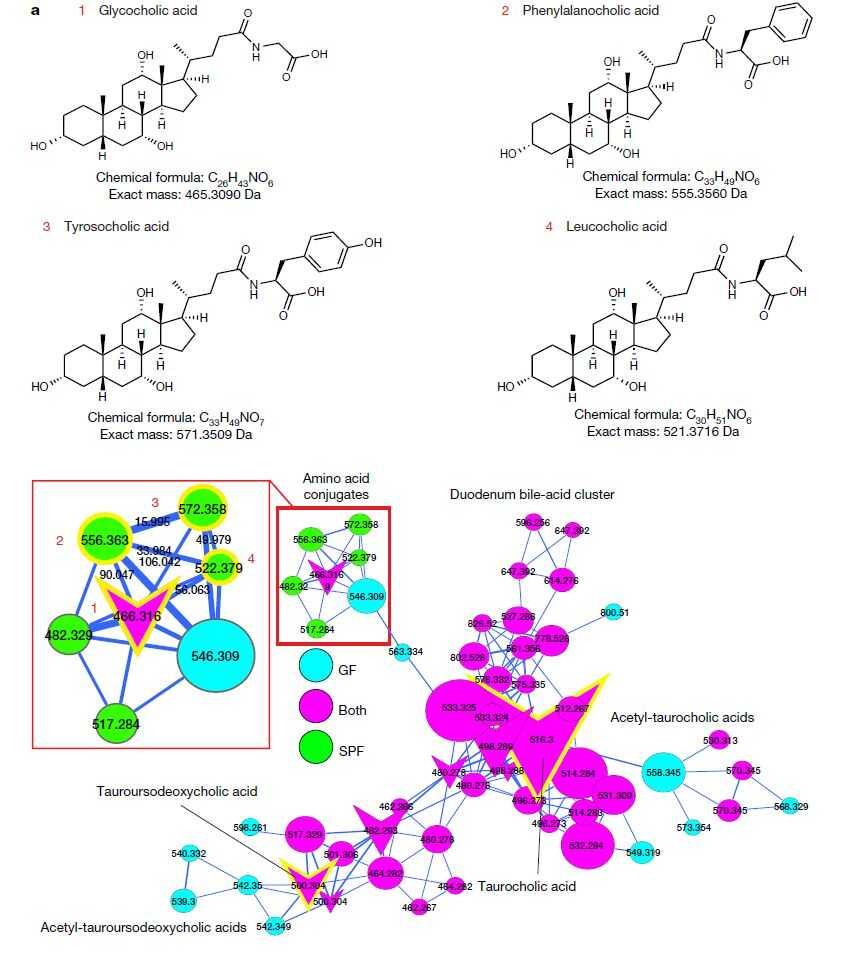 微生物修饰的胆汁酸(来源:Nature)