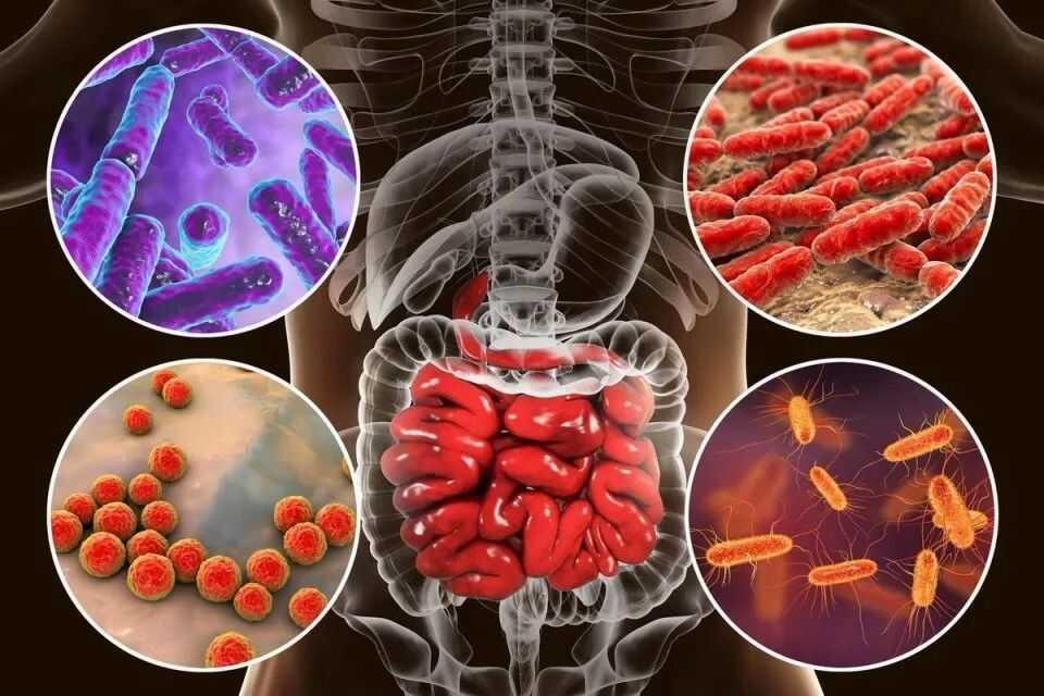 科学家绘制首张小鼠各器官全分子图谱:器官 20%-70% 成分取决于微生物
