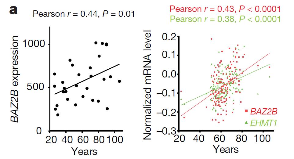 不同年龄人类脑前额叶皮层中 BAZ2B 和 EHMT1 的转录水平(来源:Nature)