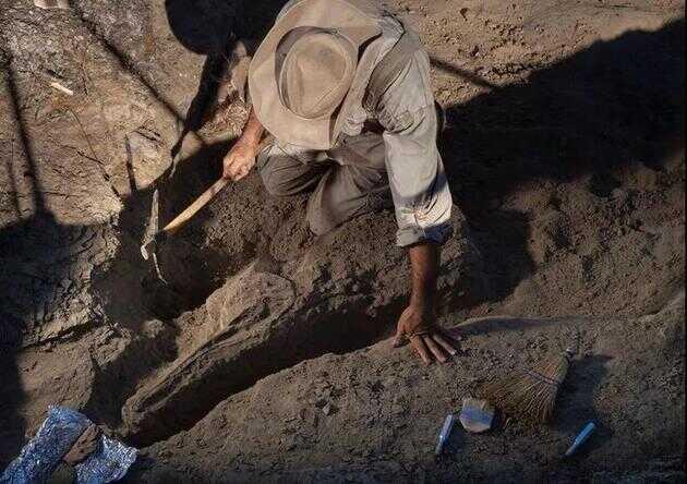 在一个半世纪的不懈搜寻中,科学家在 KT 界线层以下 3 米深的地层中几乎没有发现恐龙化石
